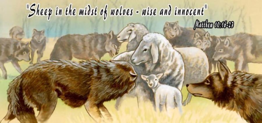 thầy sai anh em đi như chiên con đi giữa bầy sói, sợ hãi, nỗi sợ